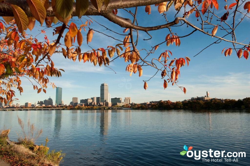 Boston / Oyster