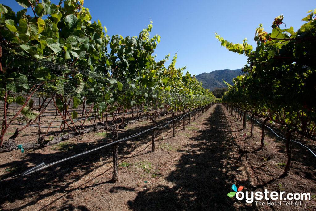 Vignobles dans la vallée du Carmel de NorCal