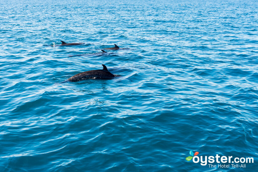 Dolphin Watching Near Puerto Escondido/Oyster