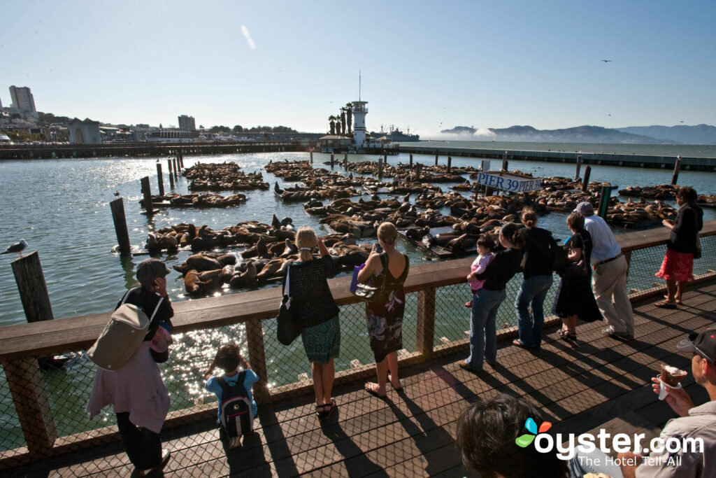 Fisherman's Wharf, San Francisco / Auster