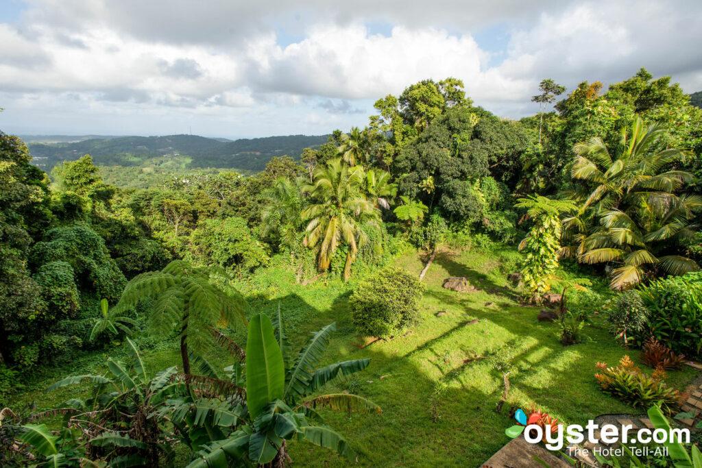 Jardin au Rainforest Inn