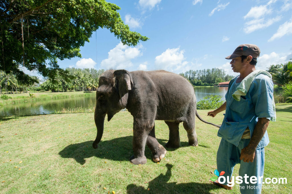 Lucky, the Banyan Tree Phuket's resident baby elephant