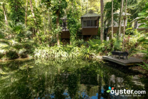Daintree EcoLodge, Queensland/Oyster