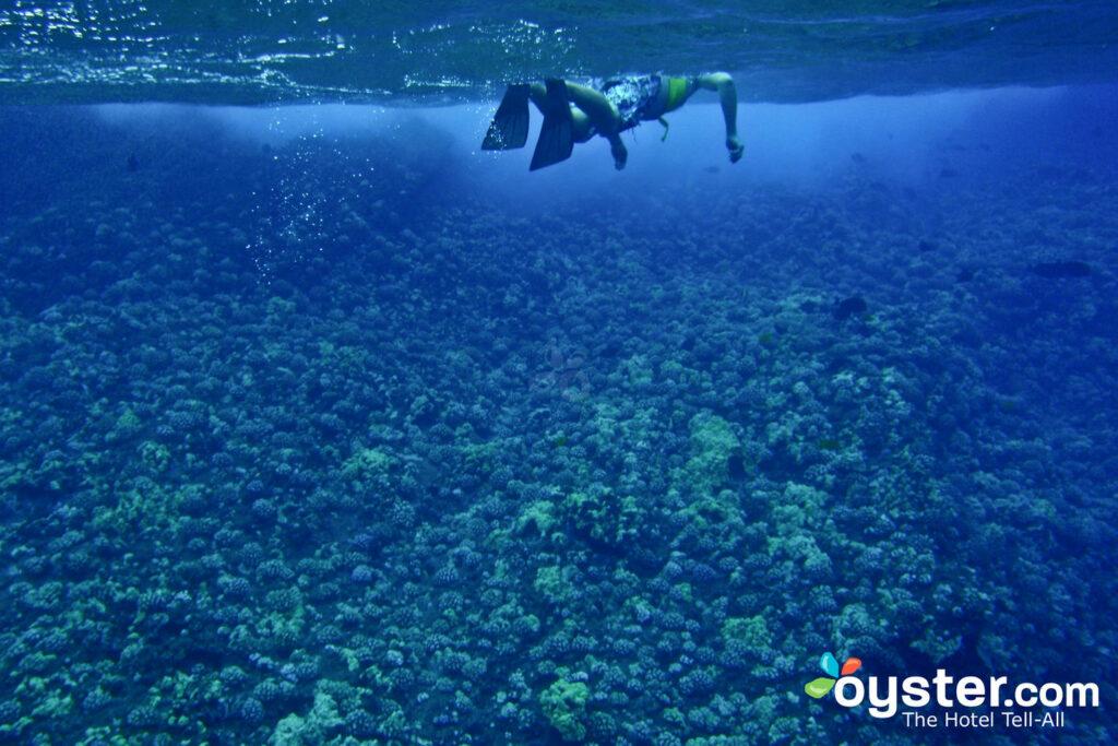 Plongée en apnée à Maui