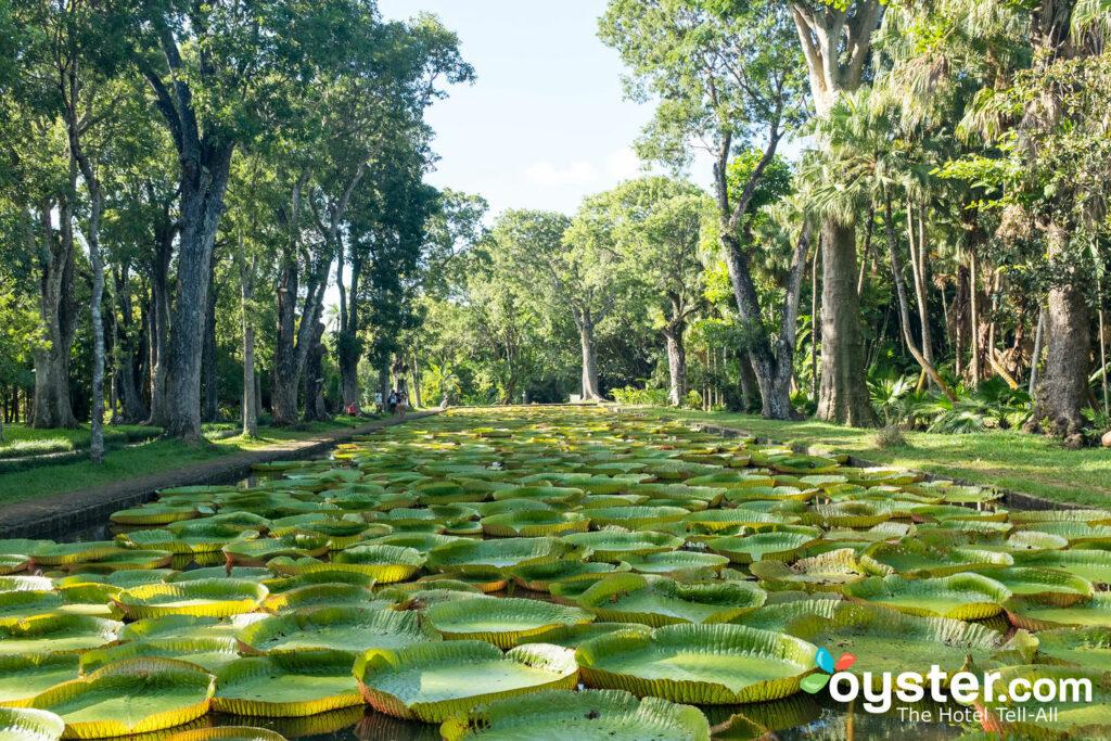 Jardín Botánico Sir Seewoosagur Ramgoolam / Oyster