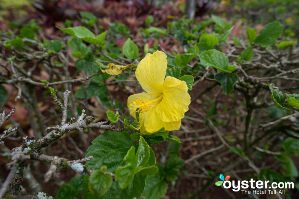Dole Plantation, Oahu/Oyster