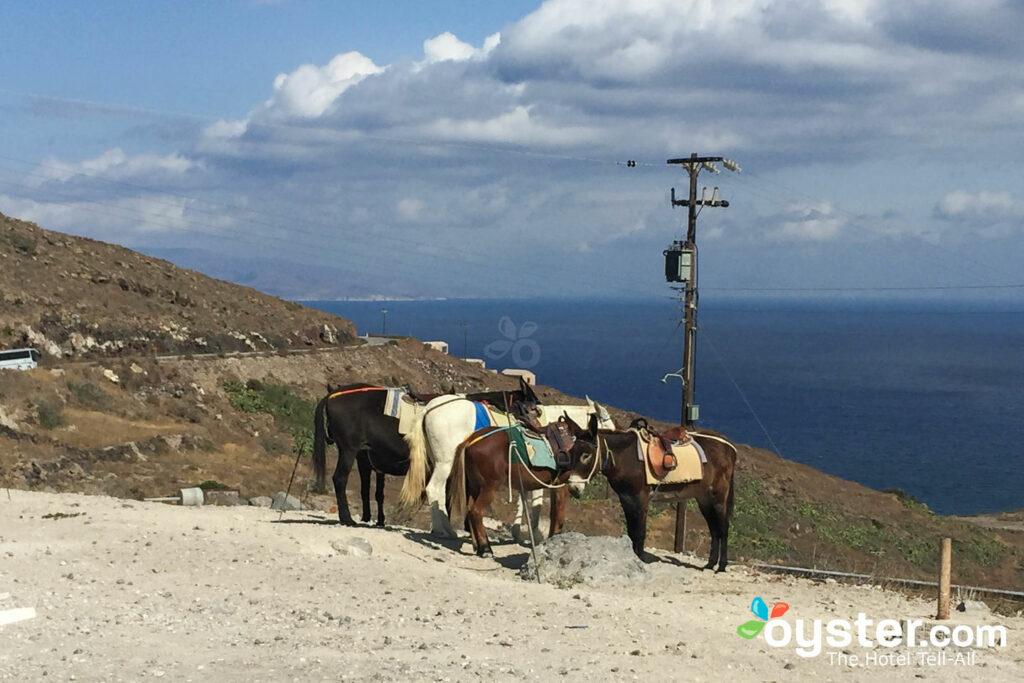 Donkeys in Oia, Santorini/Oyster