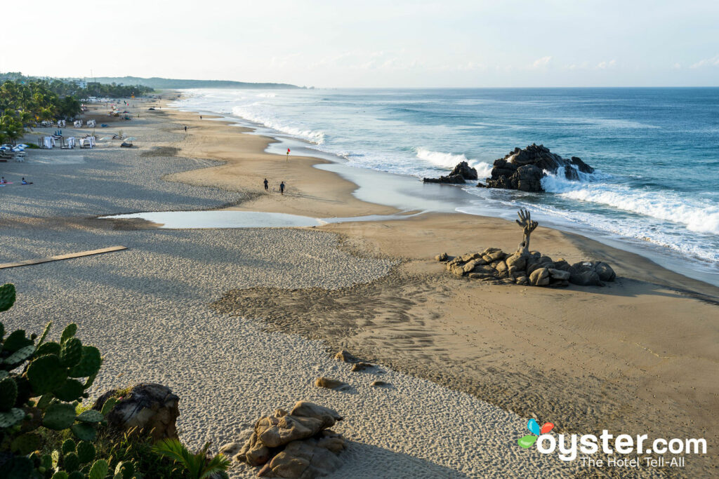 The Pounding Surf of Oaxaca/Oyster