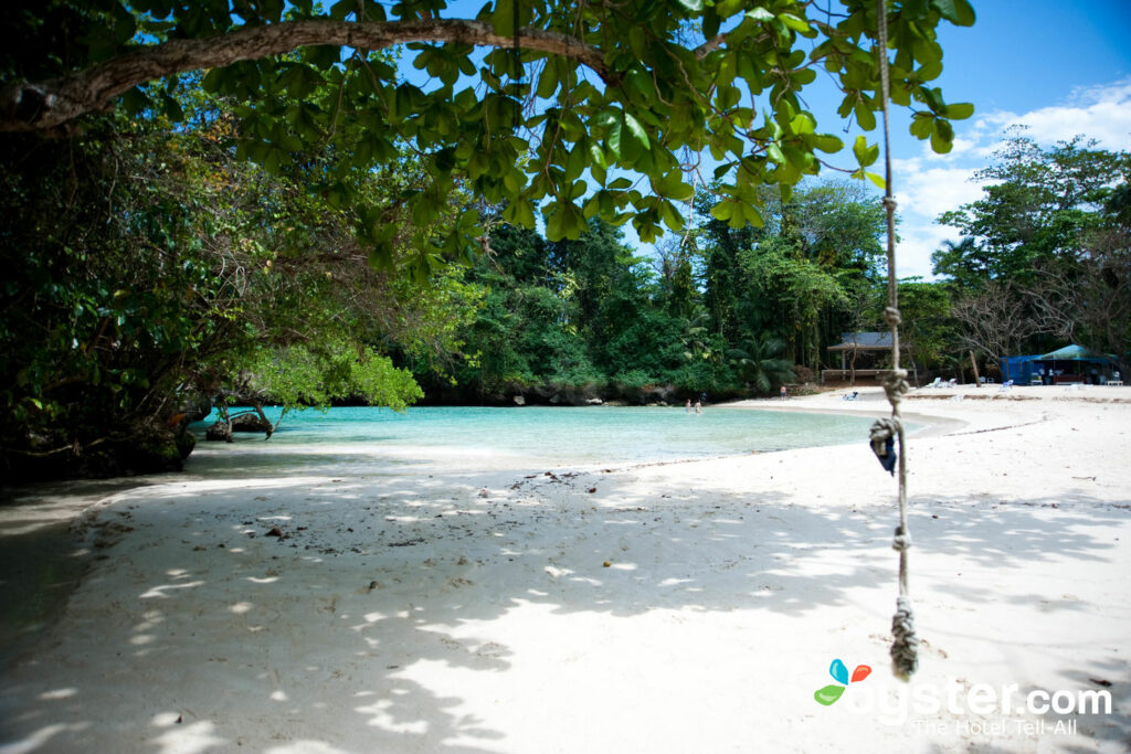 Frenchman's Cove, Port Antonio / Oyster