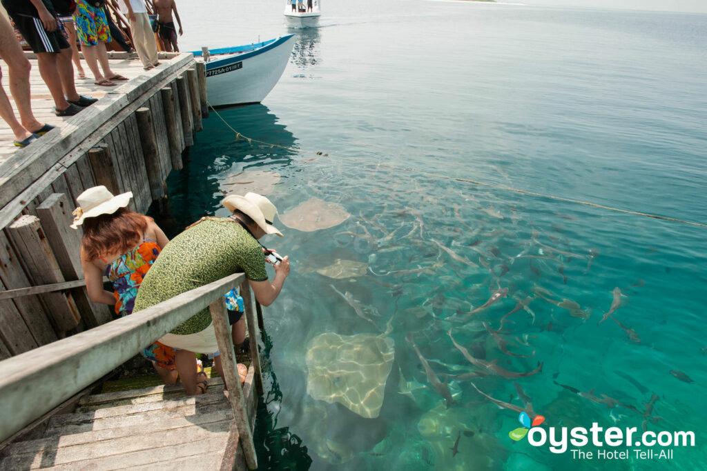 Dating sito UK un sacco di pesce