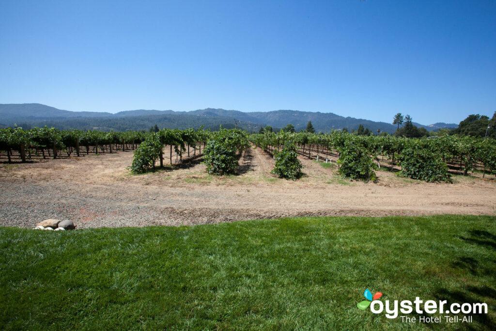 Vignobles à Napa Valley
