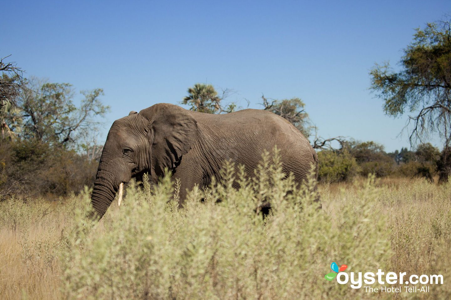 11 Tips for Planning Your First African Safari