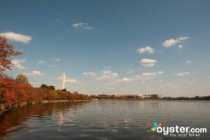 Tidal Basin/Oyster