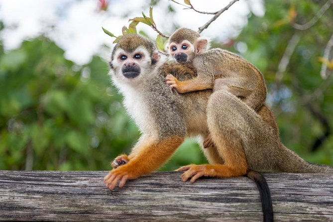 Tour de safari Monkeyland y Plantation / Viator