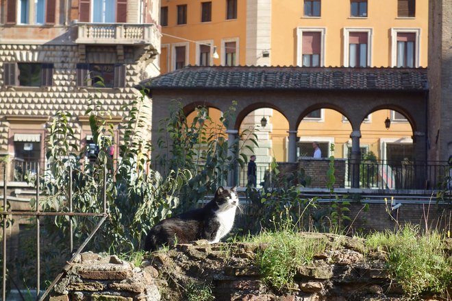 Cat Sanctuary at Largo di Torre Argentina; Sonse/Flickr