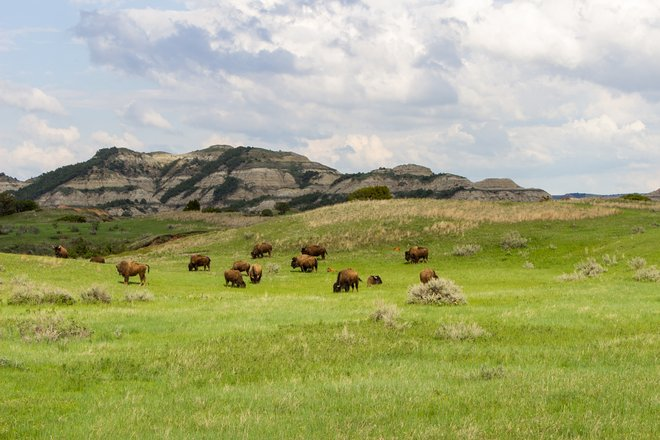 Theodore Roosevelt National Park in North Dakota; Matt Zimmerman/Flickr