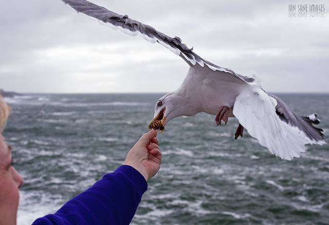 Feeding a seagull; Ian Sane/Flickr