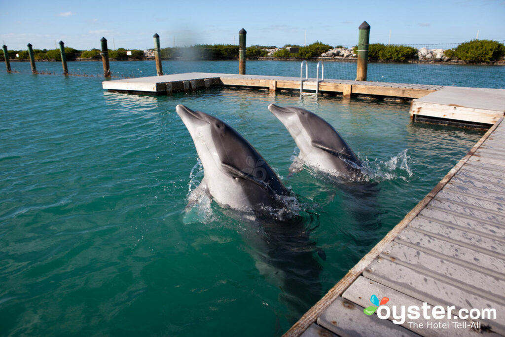 Dolphin Connection at Hawks Cay Resort, Duck Key/Oyster