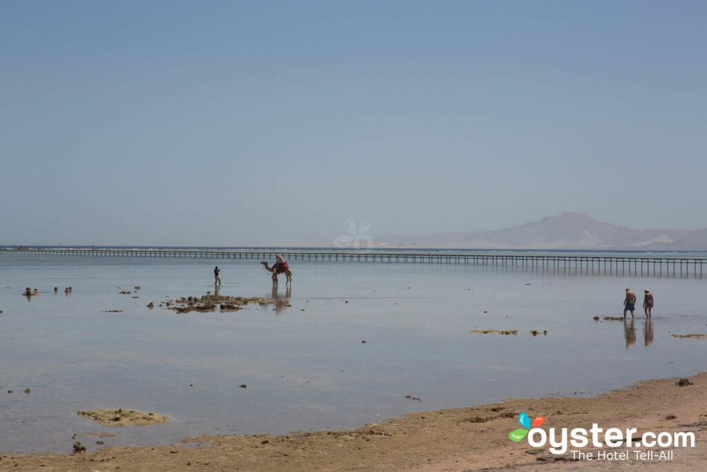 Strand bei Royal Albatros Moderna Sharm el-Sheikh / Oyster