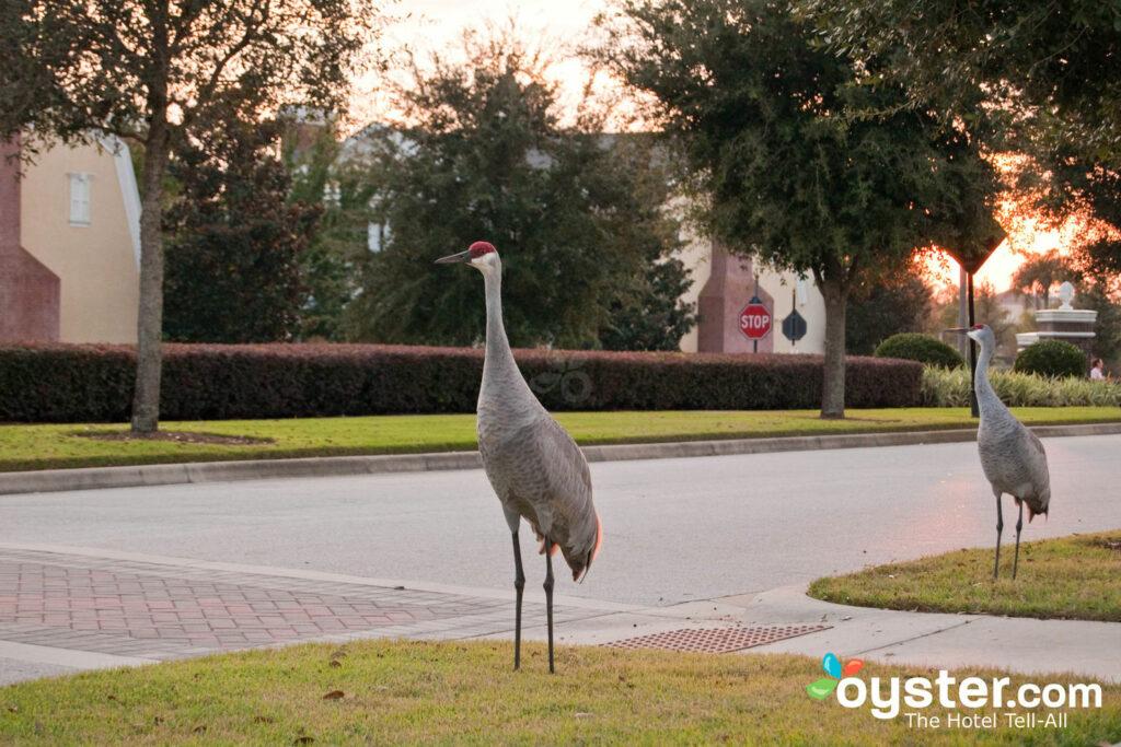 South of Disney, Orlando