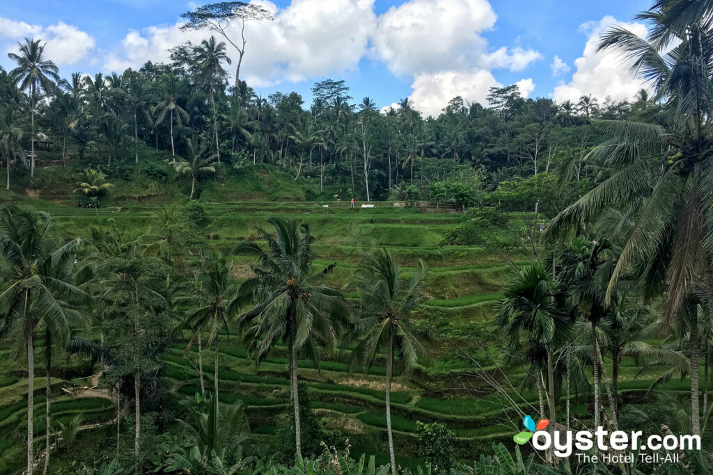 Tegalalang Rice Terrace/Oyster