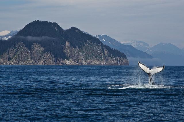 National Park Service, Alaska Region/Flickr