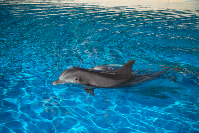 Siegfried & Roy's Secret Garden and Dolphin Habitat at The Mirage Hotel & Casino/Oyster