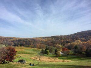 Linden Vineyards, Virginia