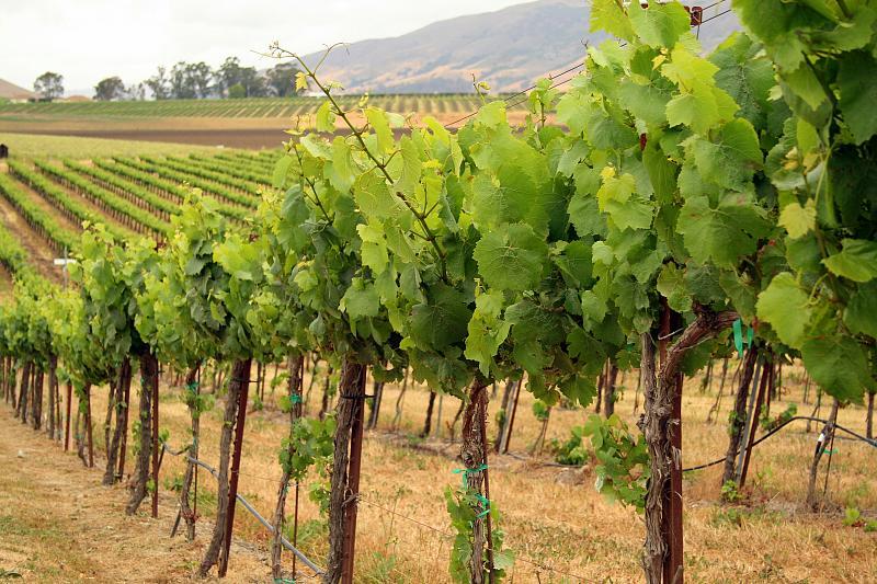 Wolff Vineyards in San Luis Obispo, California