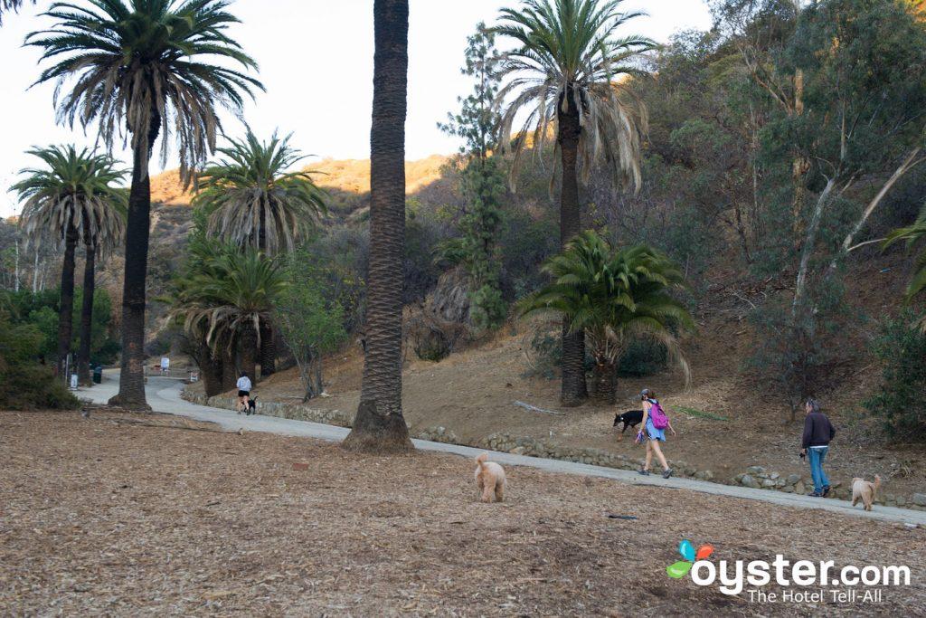 Runyon Canyon est l'une des destinations les plus populaires de Los Angeles.