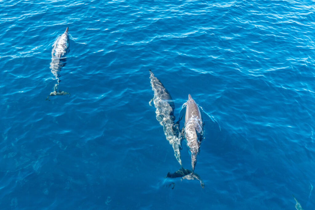 Dolphin Cruise at the Equator Village