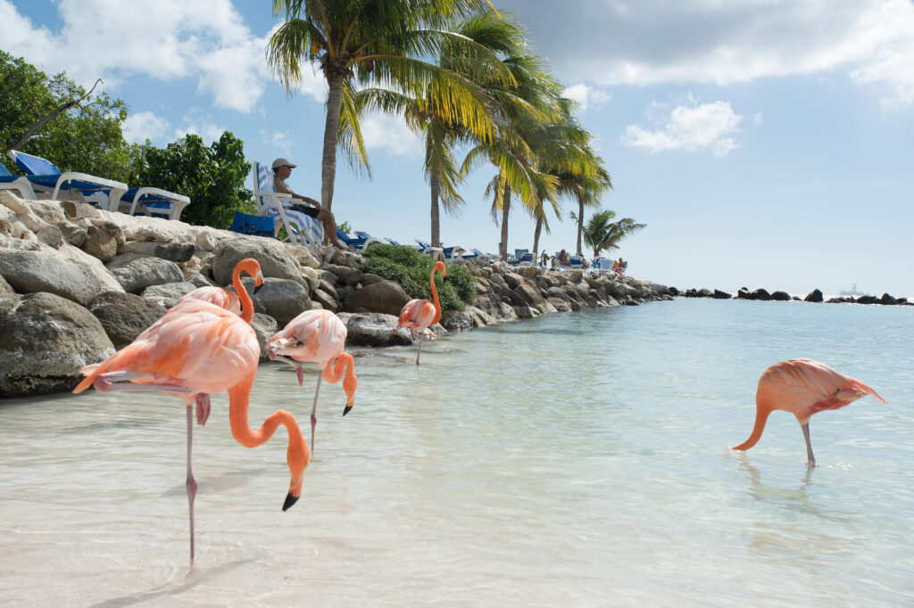 Flamingos at Rennaissance Island at the Renaissance Aruba Resort & Casino