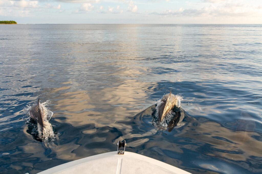 Croazieră la delfinul apusului de soare la Soneva Jani
