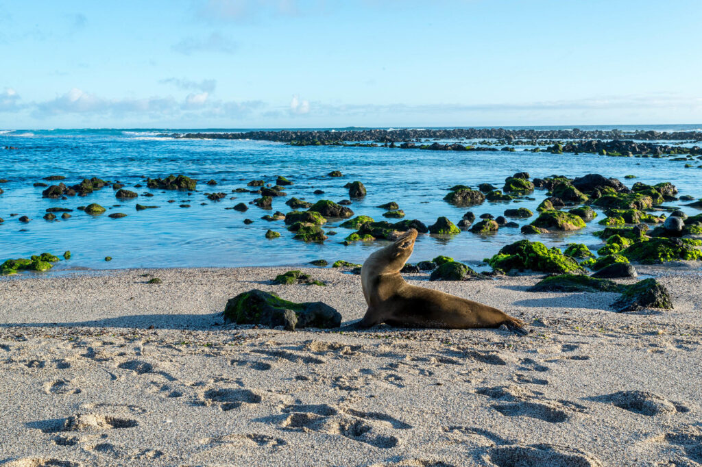 Sea lions on the beach in the Galapagos Islands