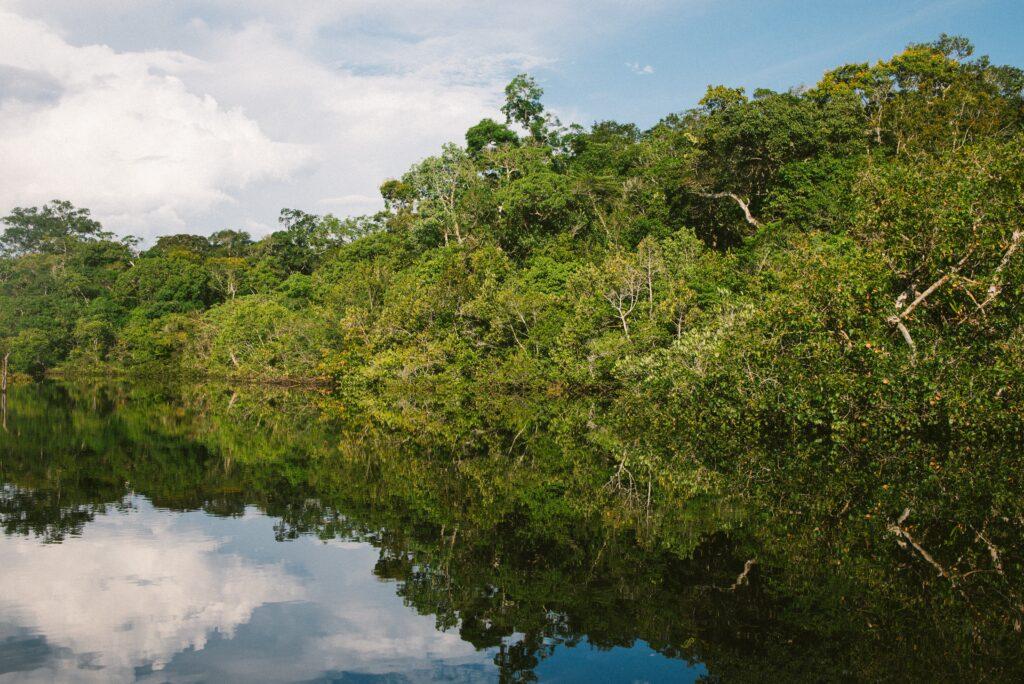 Amazon Jungle, Brazil