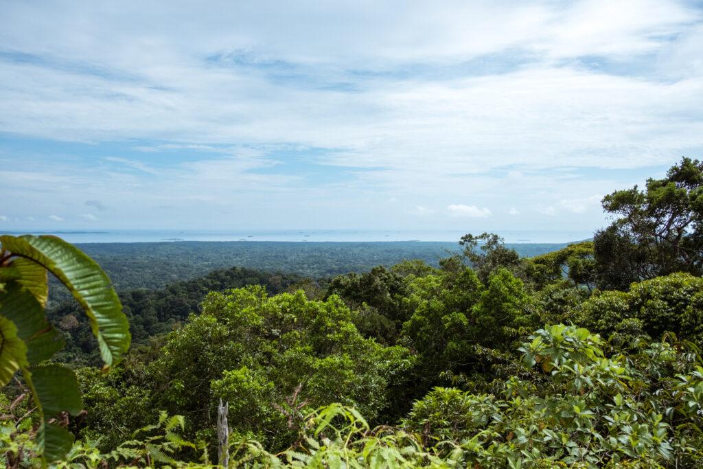 Jungle in Panama