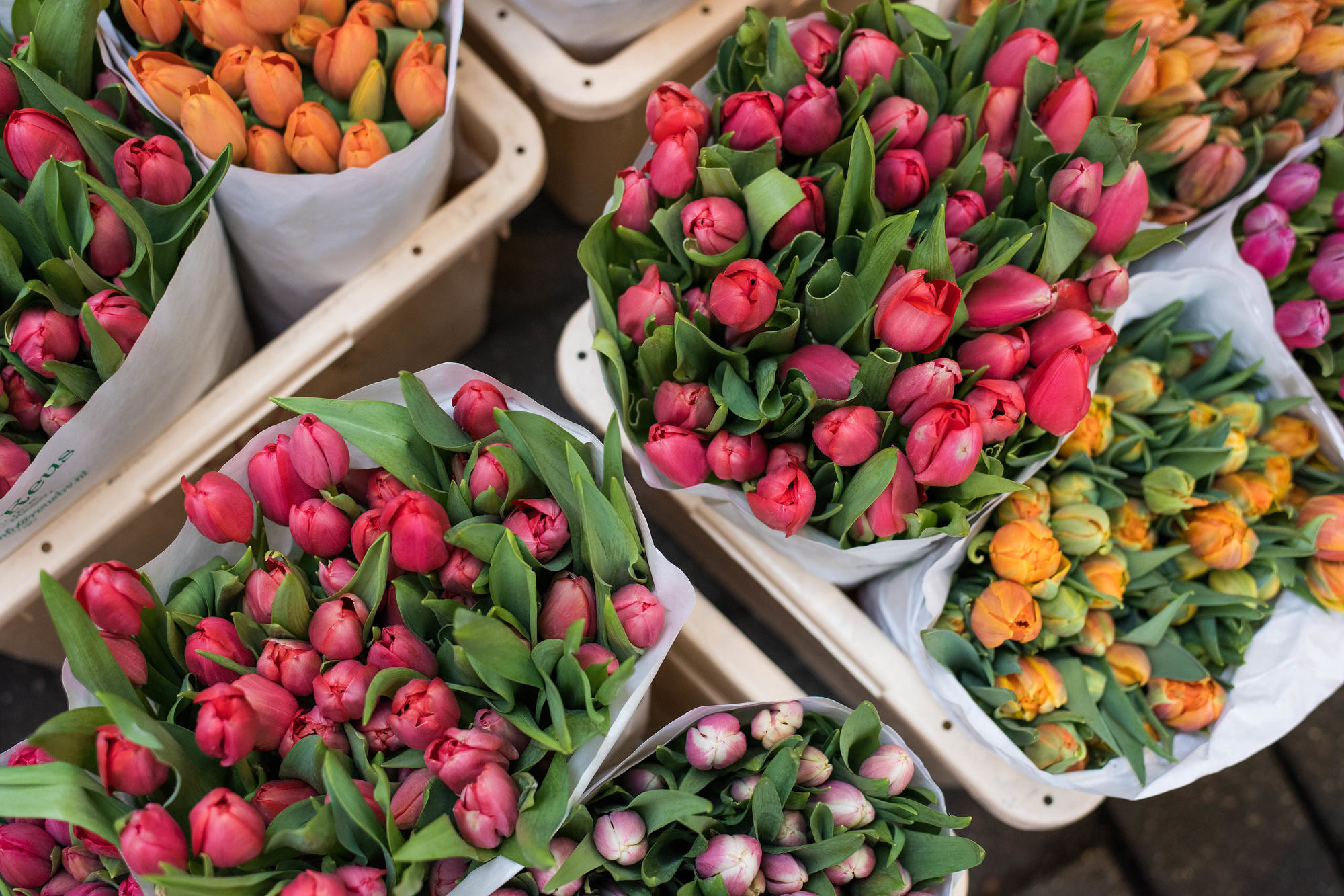Colorful tulips at the Amsterdam Bloemenmarket