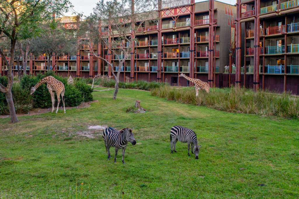 Savanna at the Disney's Animal Kingdom Lodge