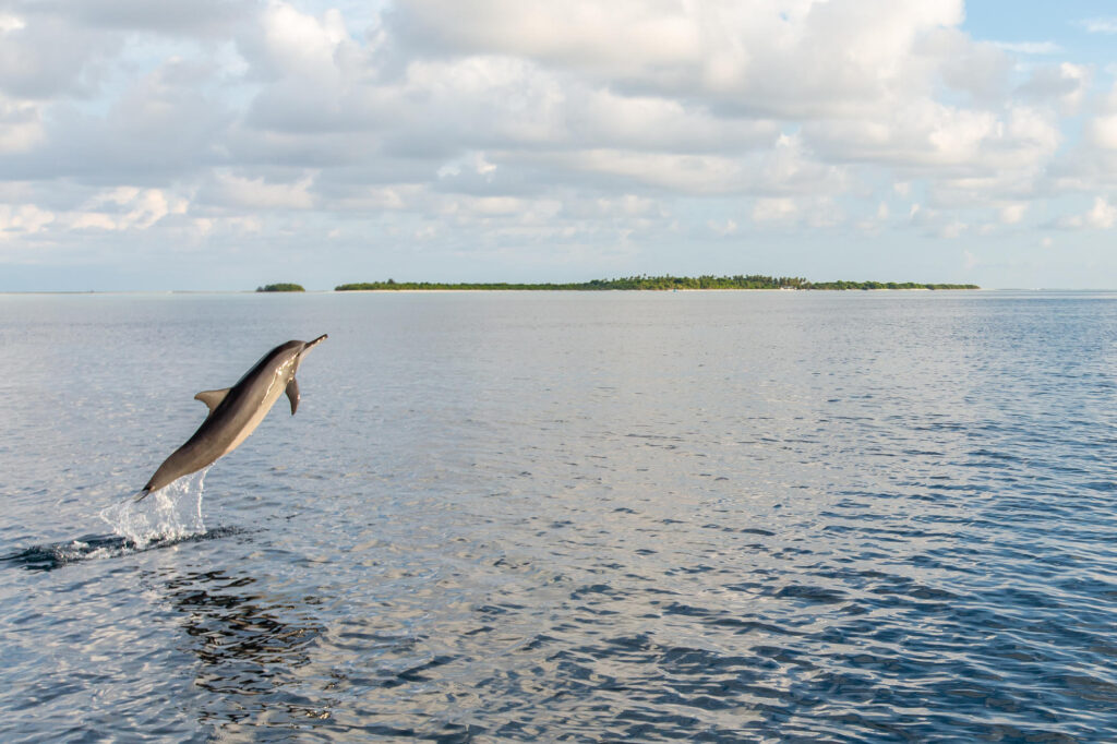 Sunset Dolphin Cruise at the Soneva Jani