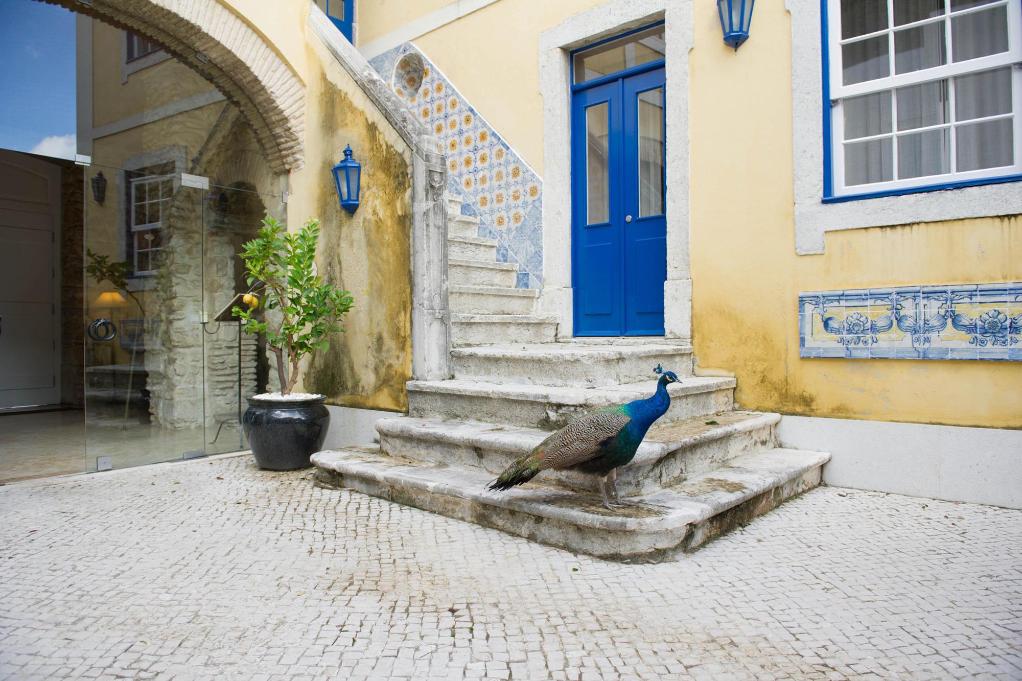 Courtyard and peacocks at Castelo do Solar in Lisbon