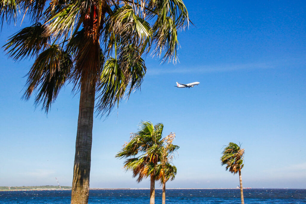 Airplane and palm trees