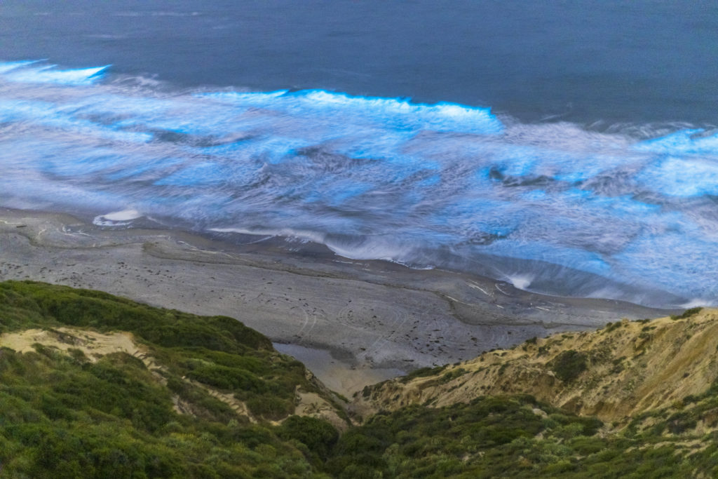 Bioluminescence on the shores of Black's Beach, San Diego County